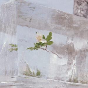 Efterklang-Windflowers-3000x3000px